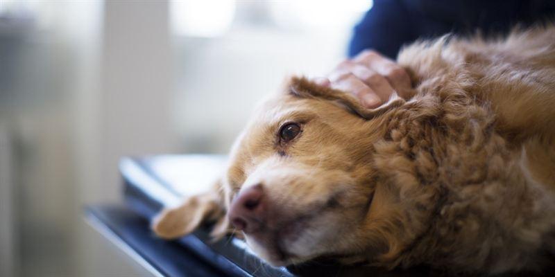 hur många hundar finns det i sverige