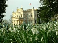 Snowdrops at Brodsworth Hall