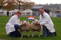 Champion pair of lambs 2011, Beltex X, owned by Yorkshire exhibitors, Martin &amp; Val Brown, Newton-le-Willows, nr Bedale.