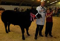 Supreme beef champion 2011 'Jaegerbomb' a Limousin with owner Tecwyn Jones and son Llyr, 13, from Conwy, N Wales