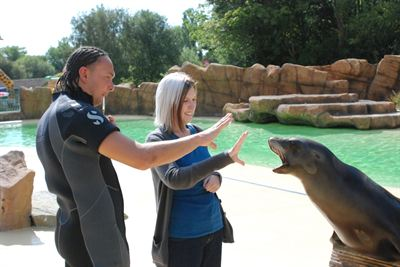 Sealion trainer