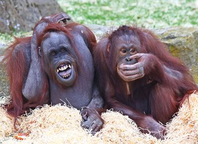 Blackpool s Orang-utans are excited about their new home