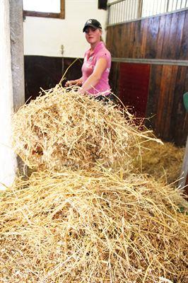 Foto 2) Hästskötare