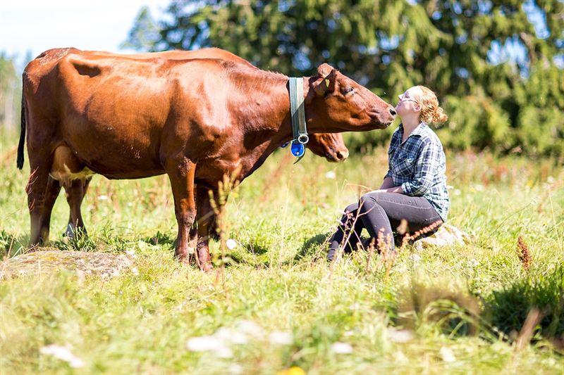 Malin Gustavsson och kor