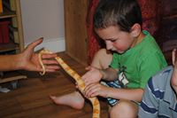 Pictured is Oliver Cavill, four, petting Patrick the corn snake