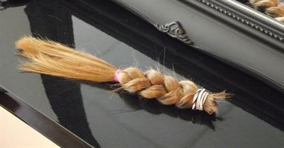 Pictured is Kaitlin&#39;s chopped-off ponytail which will be used to make wigs for poorly children.