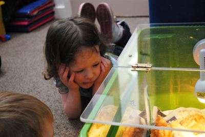Four-year-old Lily Smallwood gets an up-close look at newly hatched chicks at The Old Station Nursery's Lincoln marina setting