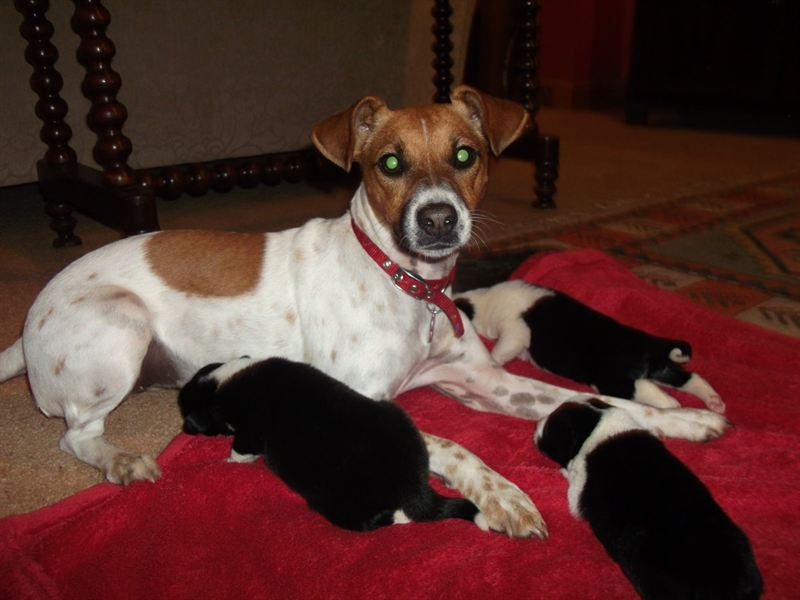Dog Rescue Centre Thirsk