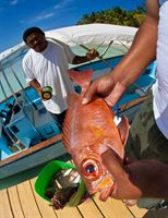 Snapper Caught Off the Coast of Sanctuary Caye