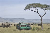 Mara Serena Safari Lodge - Game Drive Experience