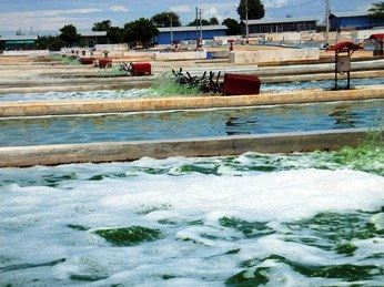 JUNE algae cultivation facility in Myanmar