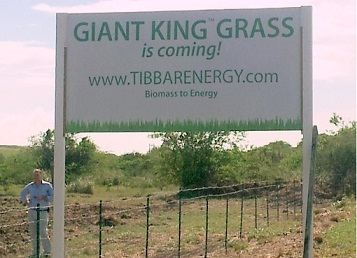 Giant King Grass is coming. 