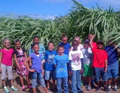 Giant King Grass on St Croix with the third-grade class