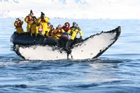 Antarctica Quark PAX whale watching-tail