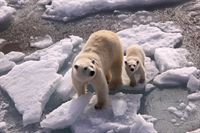 Mummy and baby polar bear