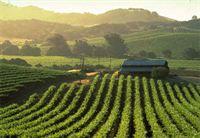 Wandel Vineyards