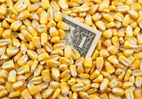 puffed corn prices