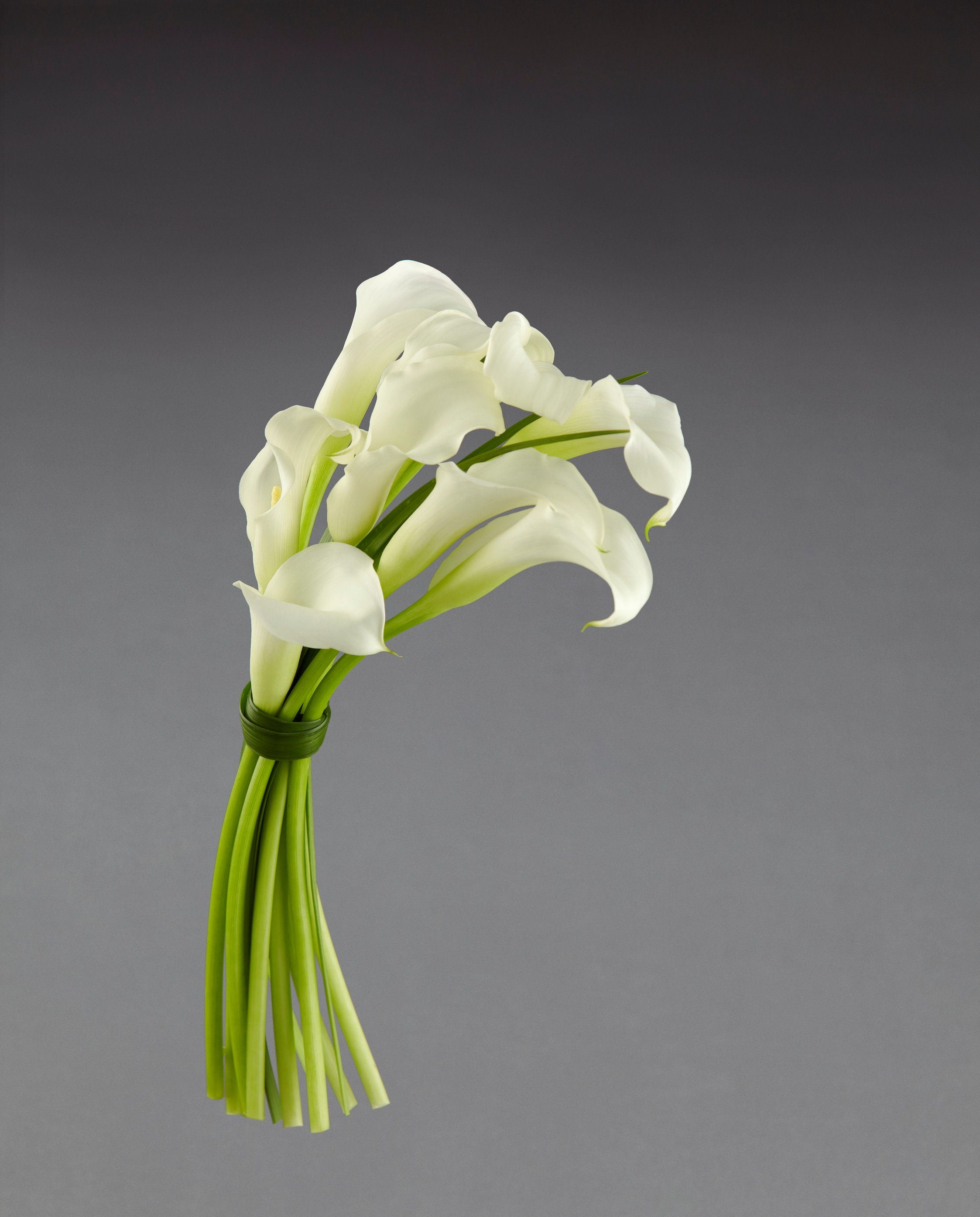 Black Calla Lily  Online Flowers Guide