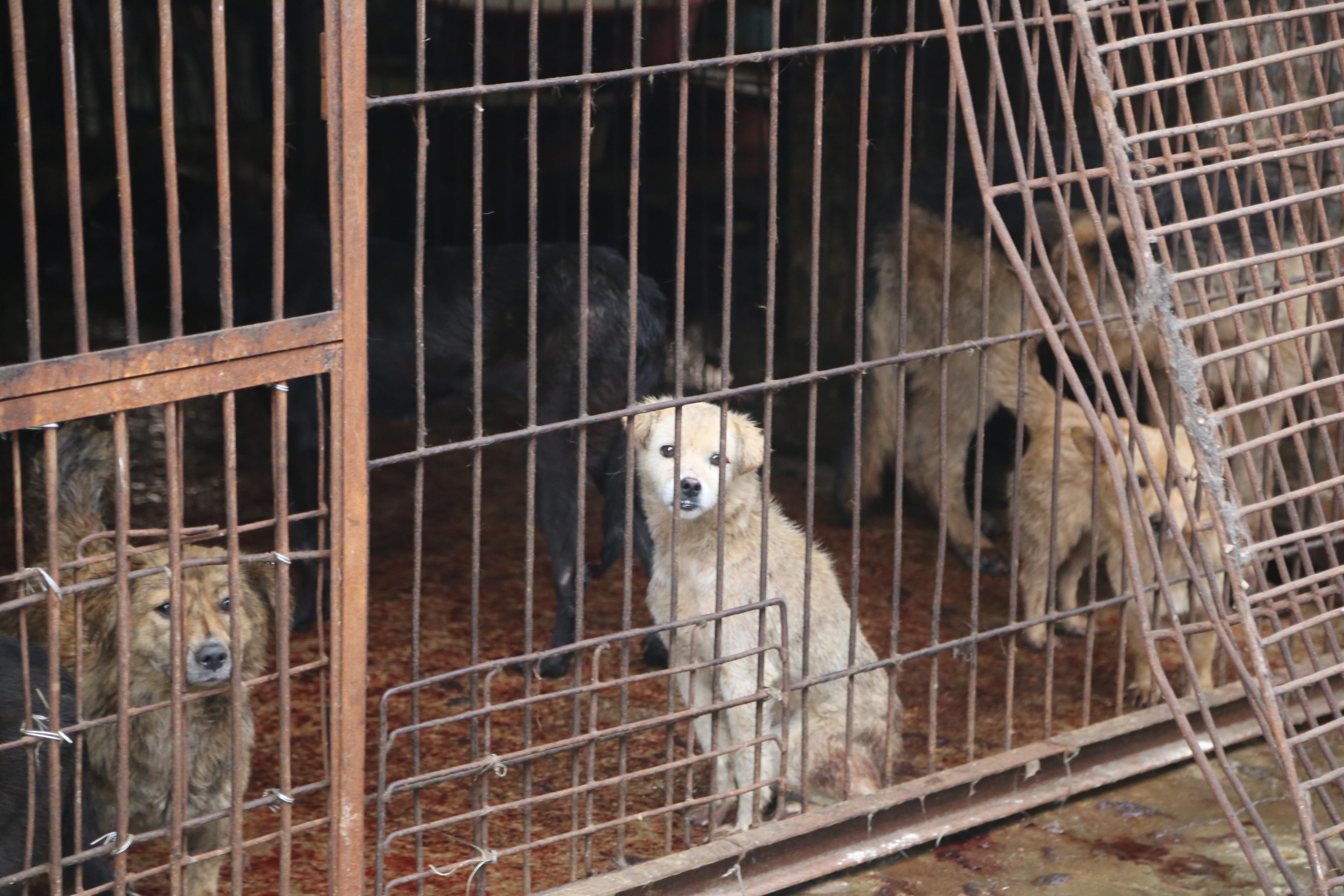 Dog slaughterhouse