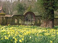 Daffodils leading to the spider gate at Hoveton Hall Gardens