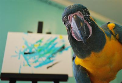 Parrot Artist