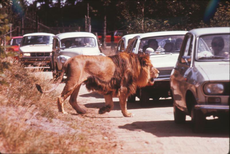 givskud løvepark