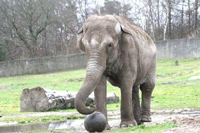 rabat Givskud Zoo overskrifter i hende
