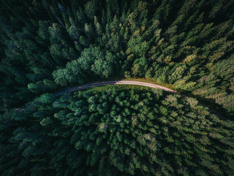 Skog ovanifrn