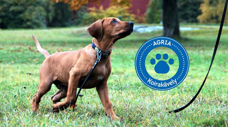 Agria Koirakvely on vuosittainen hyvntekevisyyskvely