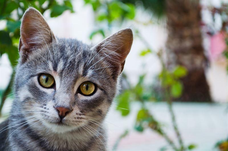 Kissat pitvt lmmst mutta kovimmilla helteill kissallekin voi tulla liian kuuma