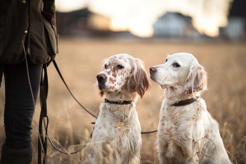 Pitk lenkki luonnossa tarjoaa koiralle hyv liikuntaa