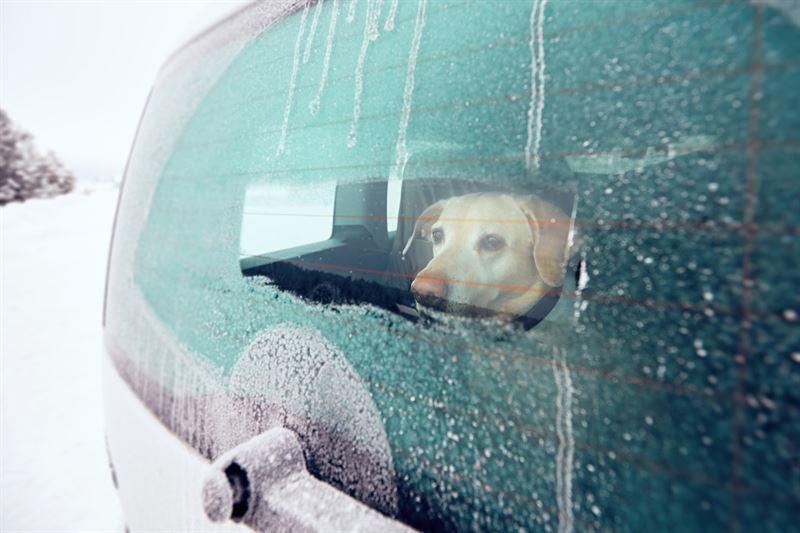 Koiralle tulee kki kylm autossa pakkasella