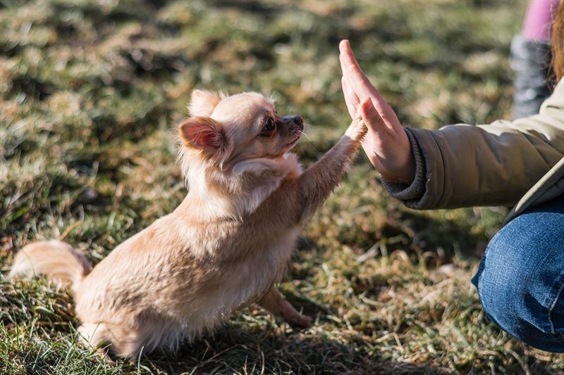 Koira tekee tutkitusti onnelliseksi