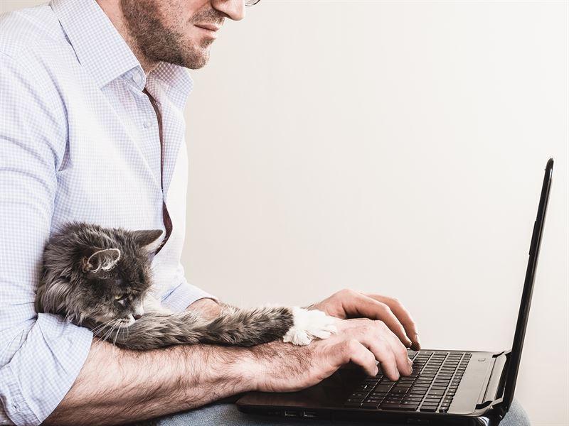 Moni kissa olisi innokas apulainen ettypivn aikana