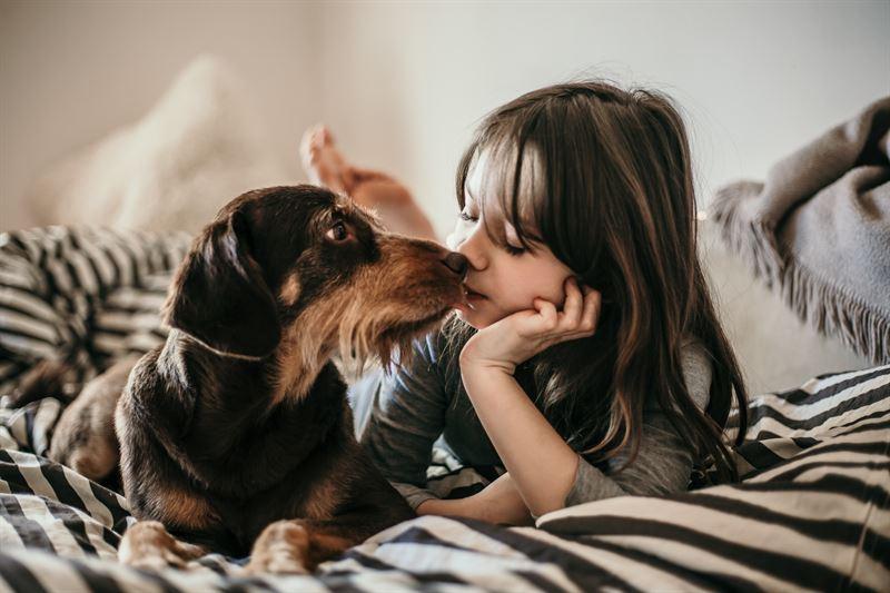 Koiran kanssa voi keksi monenlaista tekemist sisll ja kotipihalla