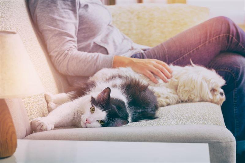 Lemmikki on hyvksi omistajansa henkiselle hyvinvoinnille