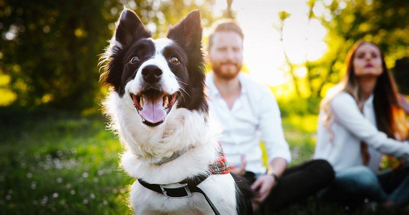 Koiran kanssa voi tutustua uusiin ystviin ja parantaa nykyisi ihmissuhteitaan