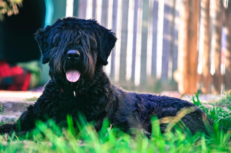 Jos koira alkaa lhtt voimakkaasti siirr koira viilen ja varjoisaan paikkaan ja tarjoa sille vett