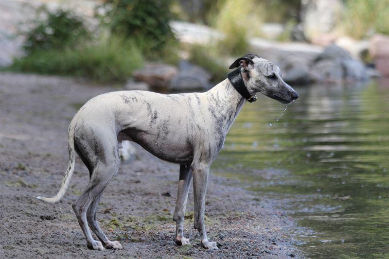 Koiraa saa uittaa vain koirille sallitulla rannalla
