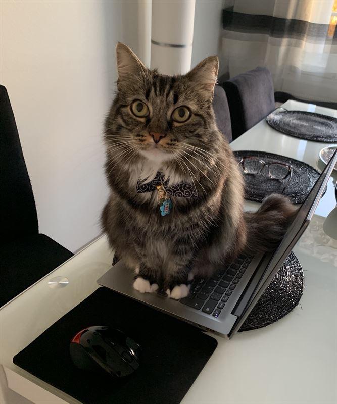 Kissat ovat auttaneet omistajiaan koronaaikana muun muassa muistuttamalla tauoista ettypivn aikana