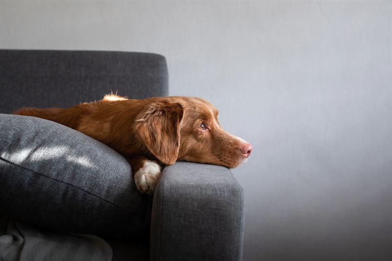 Koiralle ei kannata antaa ihmisille tarkoitettuja srkylkkeit