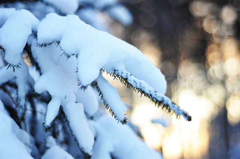 Vintertrd