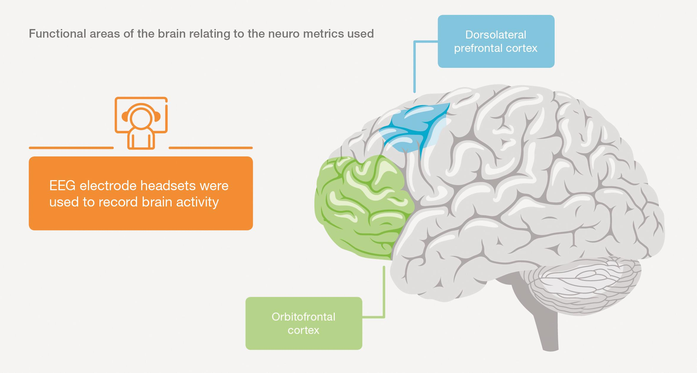 Graphic - Areas of the brain related to neurometrics
