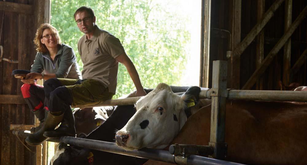 Maitotilayrittäjät