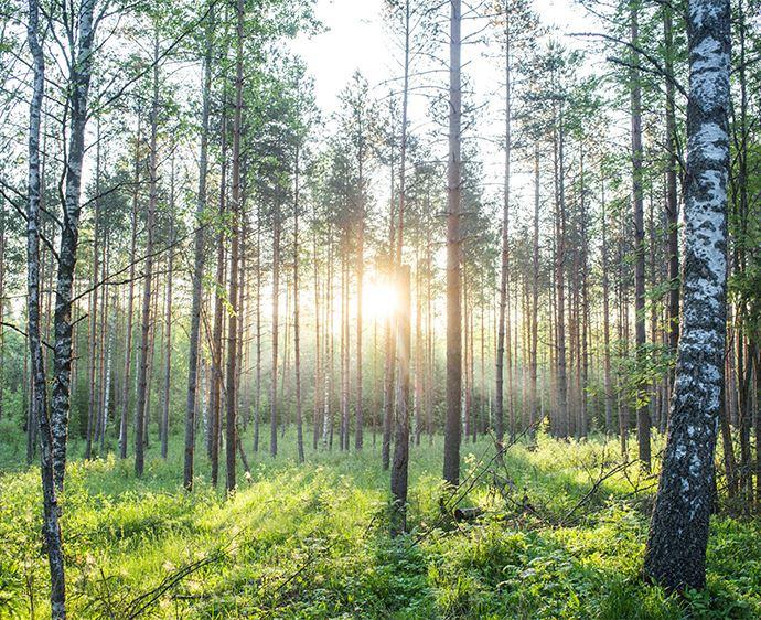 Metsä Board Oyj