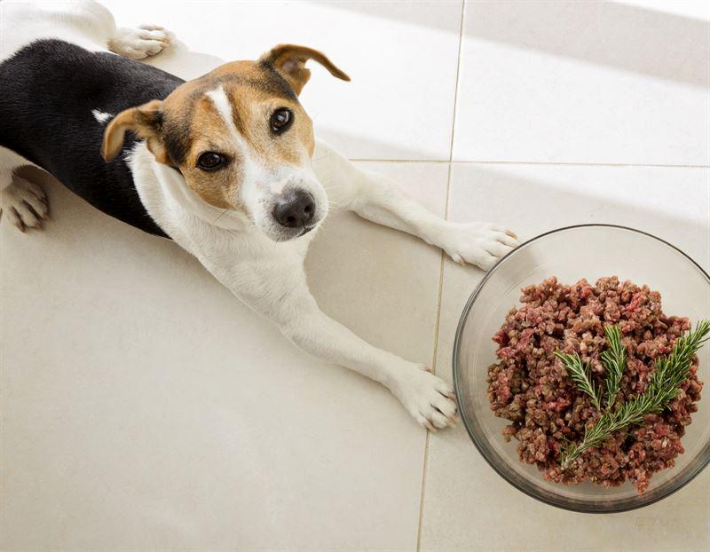 Hund med frskfoder i skl