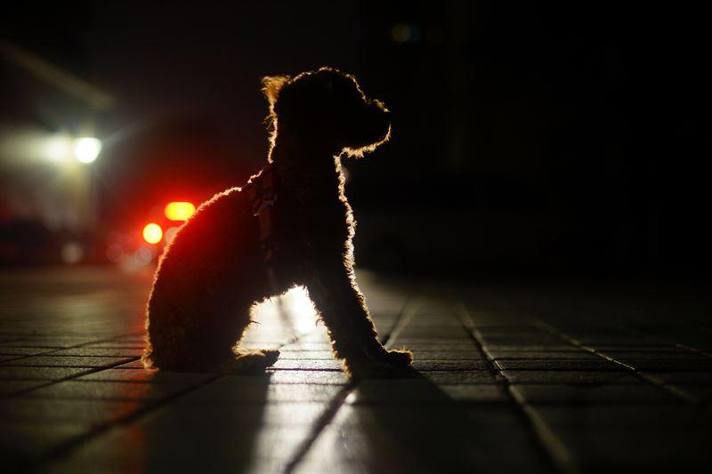 Hunde og katte br bre reflekser
