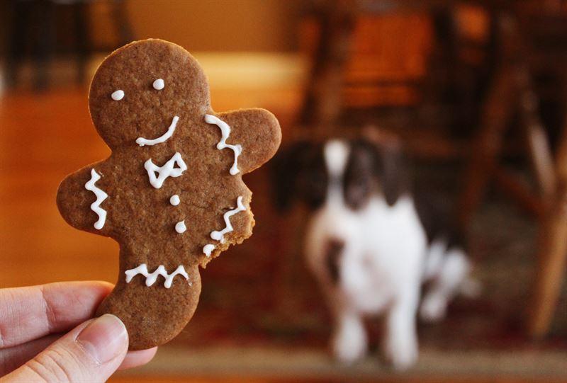Hunden m ikke f julegodt