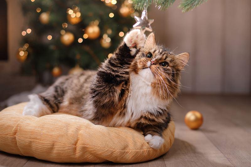 Kat leger med juletrspynt