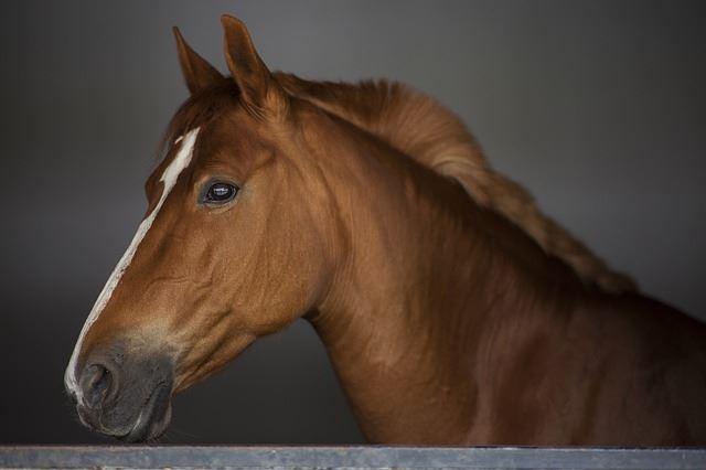 Hest i stald